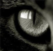 th_480511215_in_a_cat__s_eye_by_galijakuzzi_122_129lo.jpg